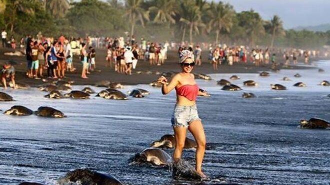 Turista interrumpiendo desove de tortugas