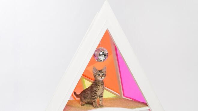 Color y bola de discoteca para los mininos