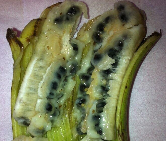 Plátano con semillas (diploides)