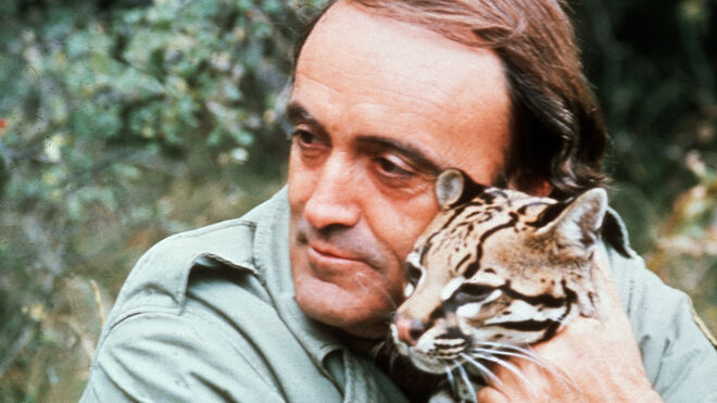 Rodríguez de la Fuente durante el rodaje de uno de los documentales de 'El Hombre y la Tierra' para TVE. En la imagen con un ocelote, especie autóctona, en vías de extinición.