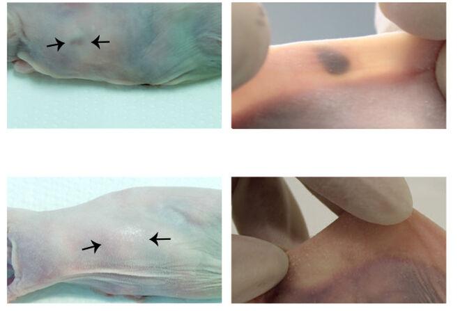 Imagen de las pruebas realizadas en ratones