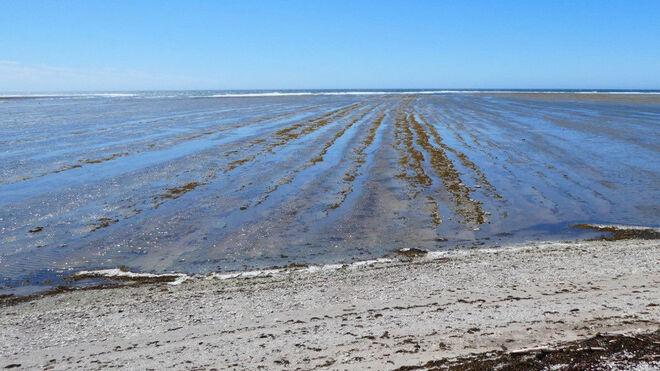 Zona de la costa de la isla de Anticosti donde se recogieron las muestras