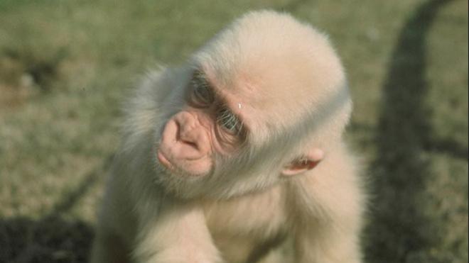 Copito, en sus primeros años en el zoo