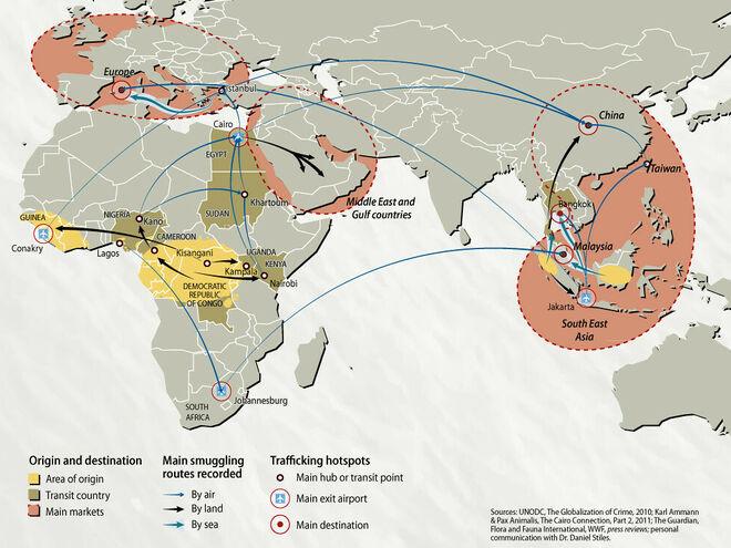 Principales rutas del tráfico de grandes simios