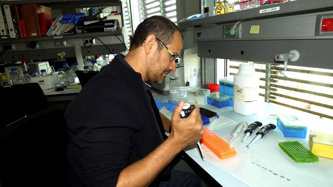 Tomás Marqués Bonet, trabajando en su laboratorio