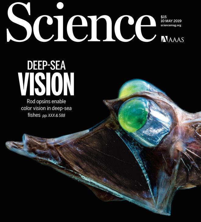 El 'pez gallo' es uno de los incluidos en el estudio y ocupa la portada de Science