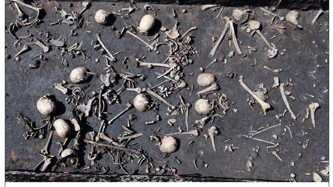 Algunos de los huesos encontrados en el río Tollense, lugar de la batalla