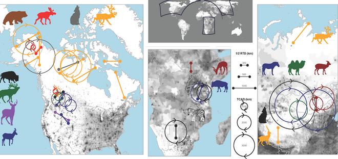 Migraciones documentadas por el equipo internacional de investigadores