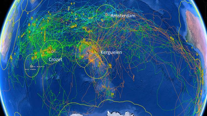 Las señales de localización recogidas por las distintas especies de albatros