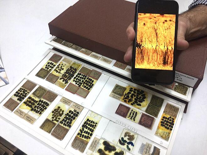 Algunas de las preparaciones histológicas originales de Ramón y Cajal