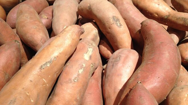 Boniato o batatas, una patata dulce.