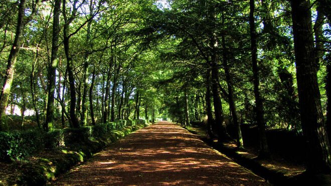 Bosque de Broncelianda (Bretaña francesa).