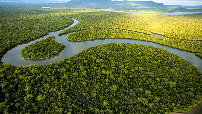 Bosque de Sarawak, Indonesia.