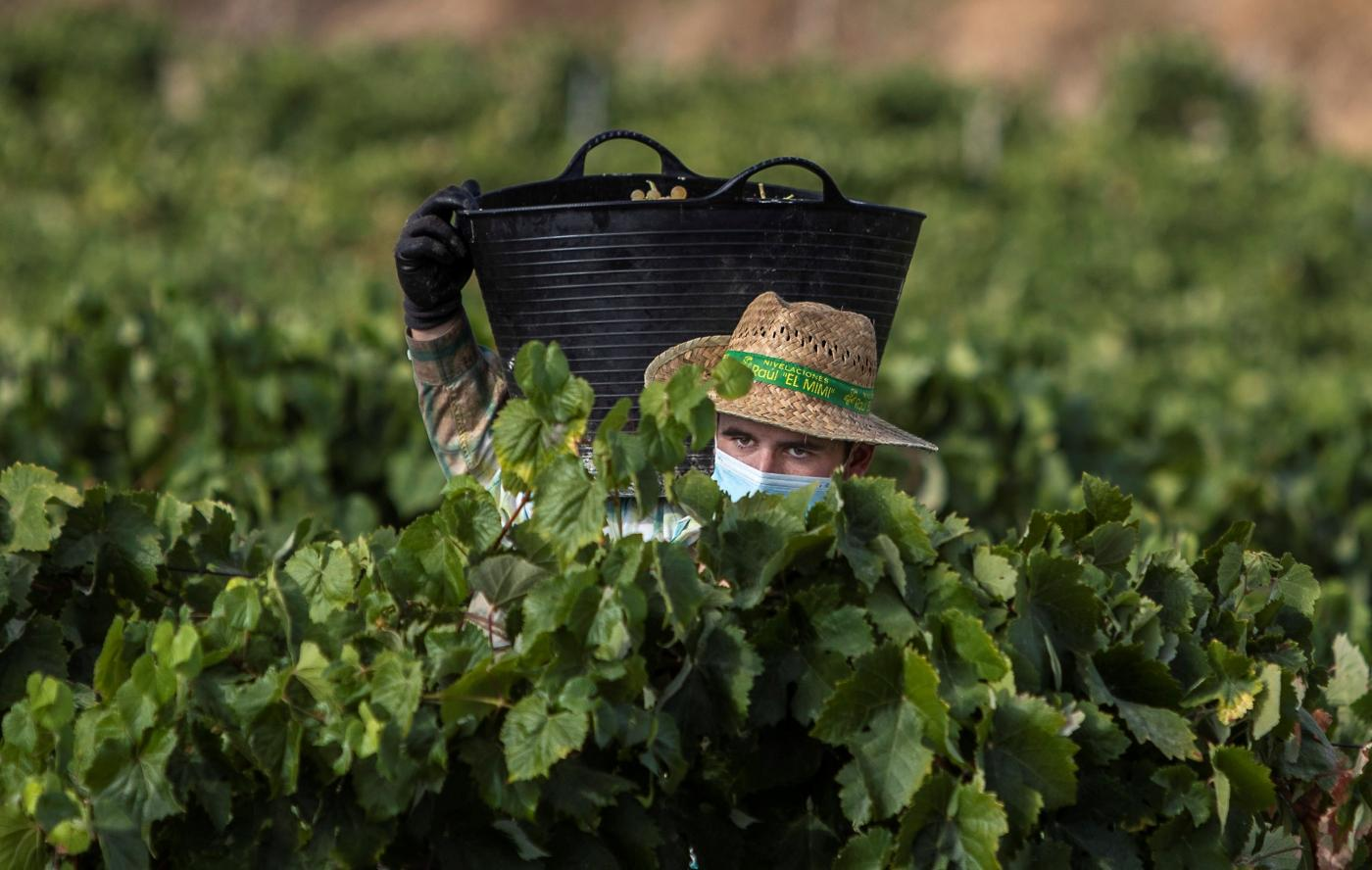 Un agricultor con mascarilla.