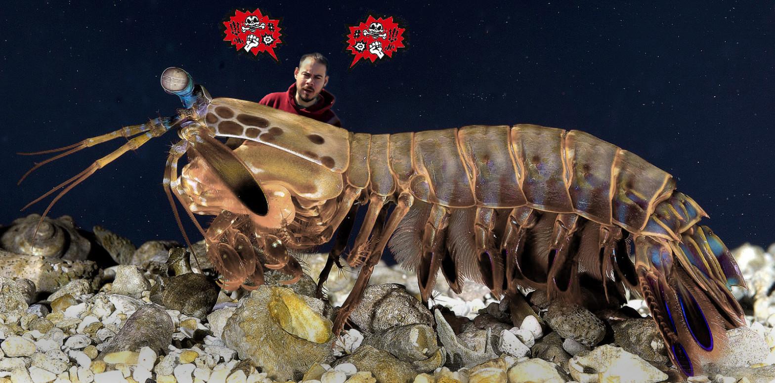 Pablo Hasel y el ego del camarón mantis