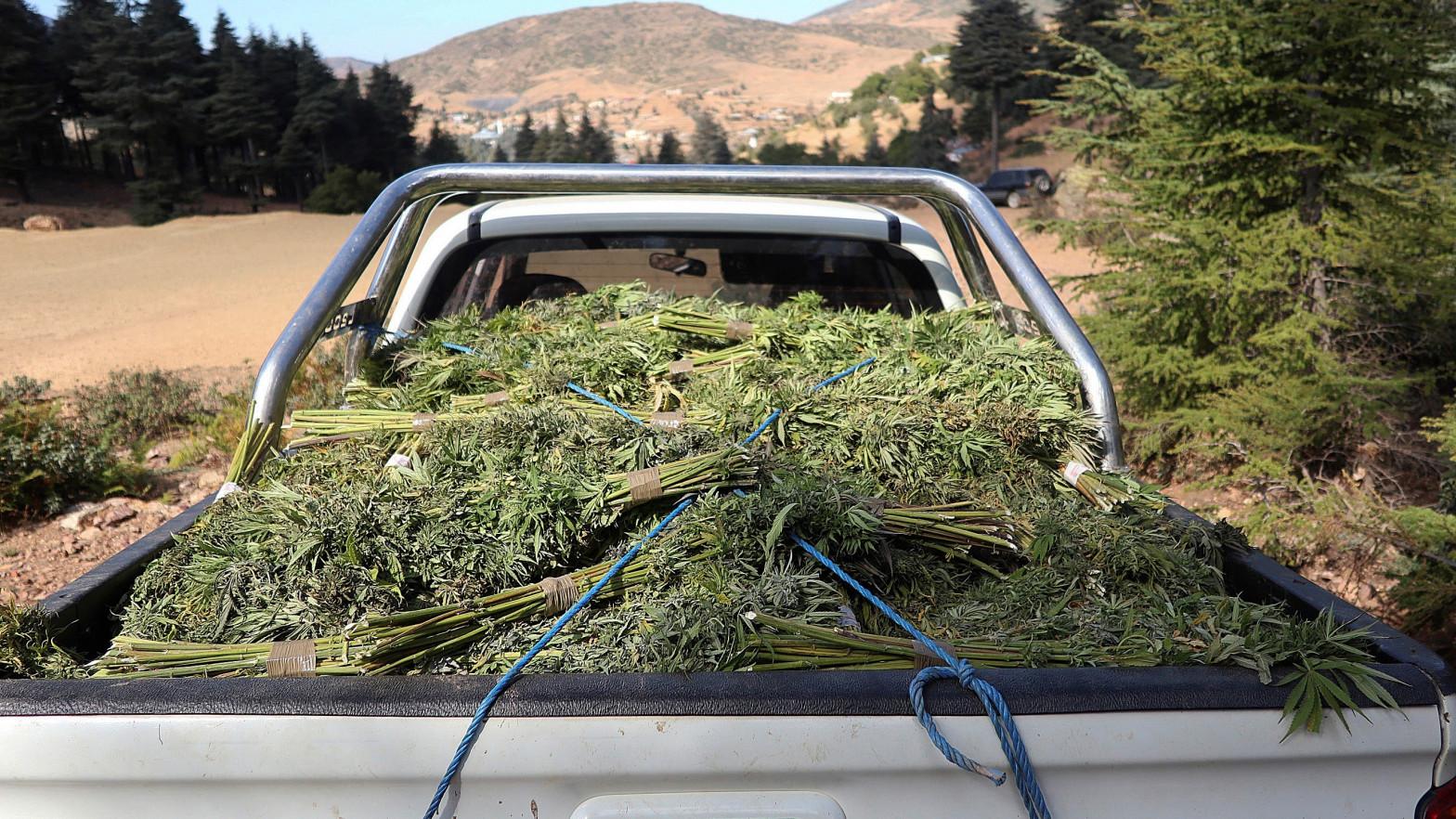 Marruecos legalizará ciertos usos del cannabis