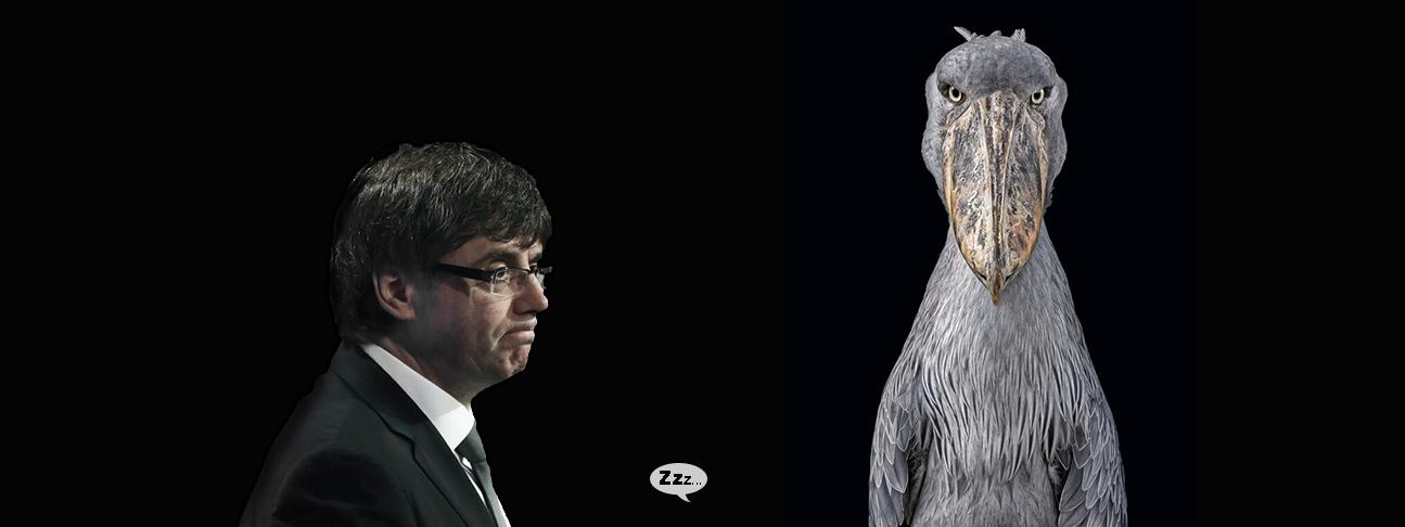 Carles Puigdemont y el futuro del picozapato