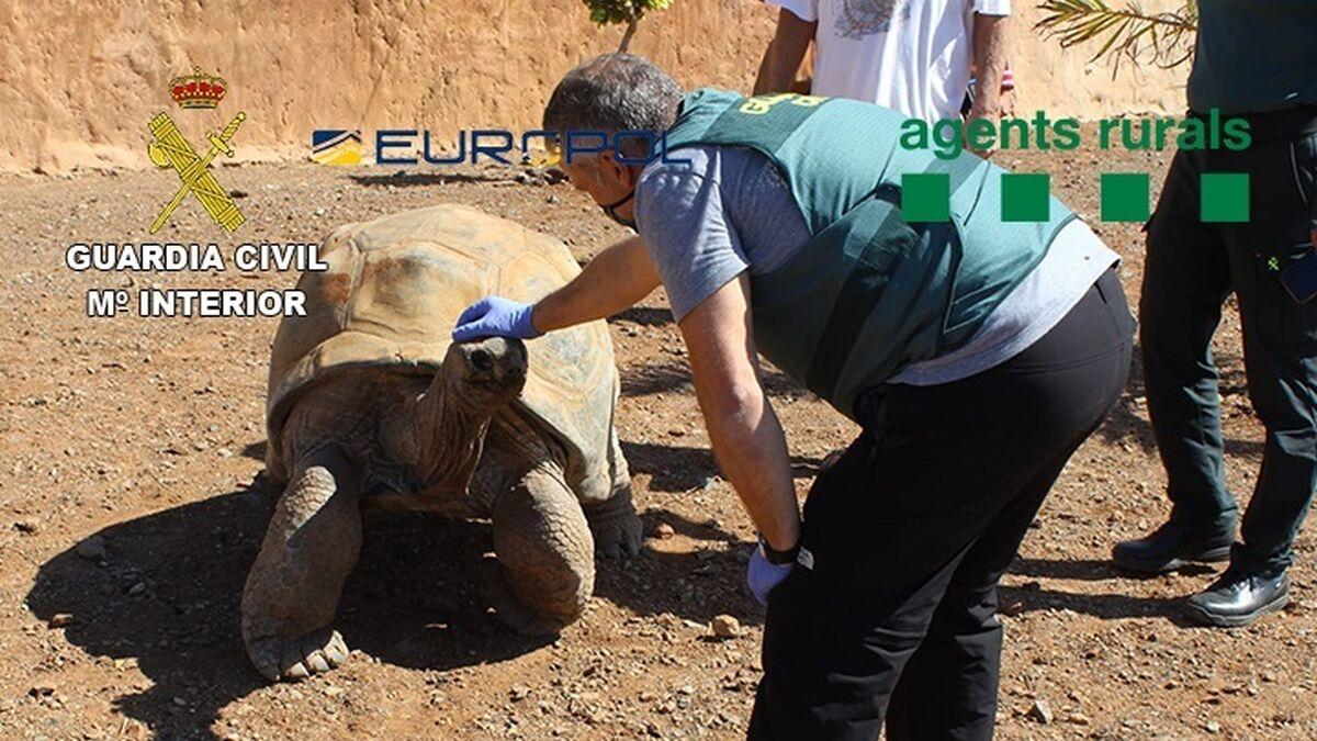 Cae una red de traficantes de animales que vendían tortugas de 30.000 euros
