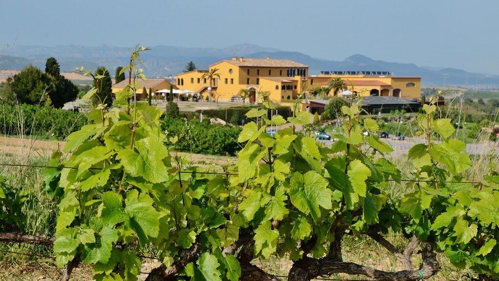 El syrah de Can Bonastre, el viñedo que mira a Montserrat