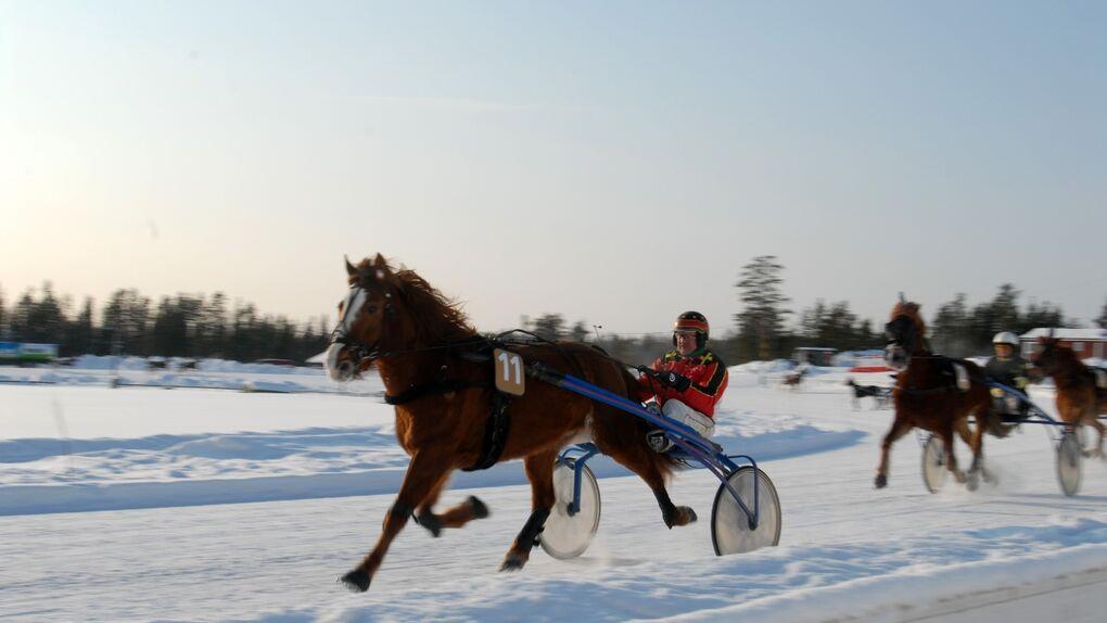 Trotones en Finlandia: un día en las carreras