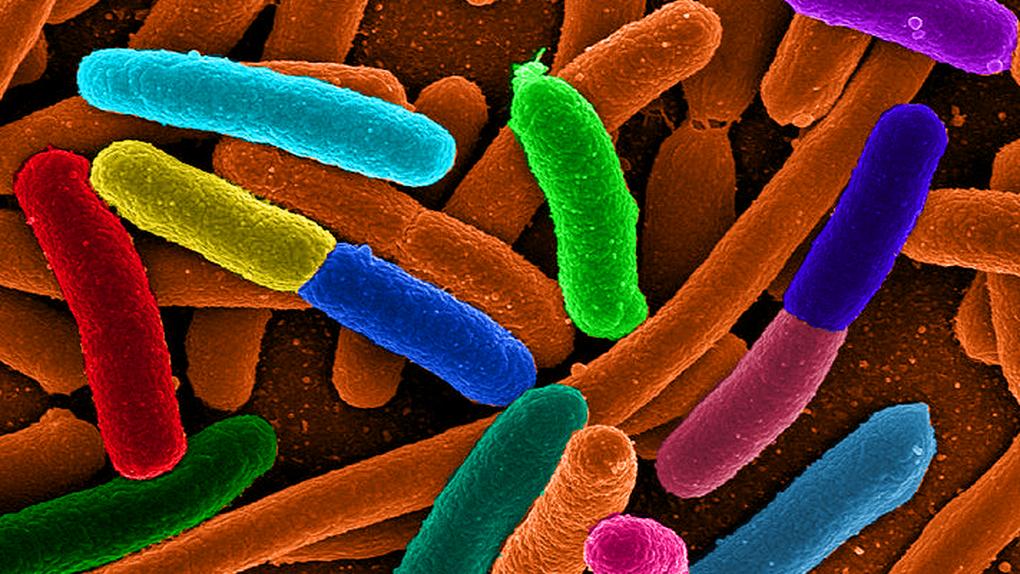 Descubren por qué las bacterias son casi indestructibles