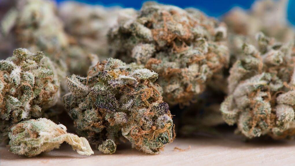 """Detectan una nueva droga 80 veces más potente que el cannabis """"tradicional"""""""