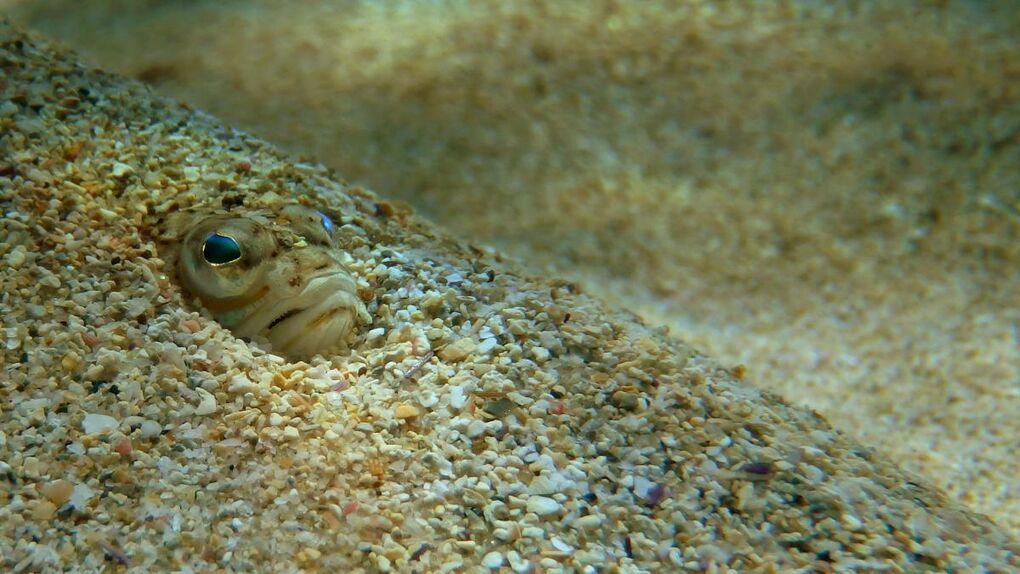 Un joven muere tras la picadura de un pez araña en una playa de Cataluña