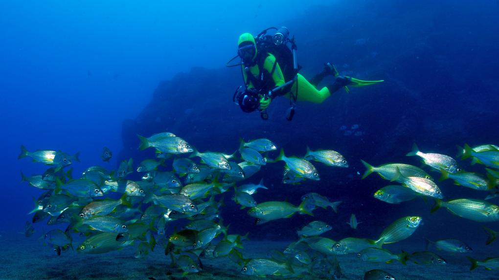 Madeira, mejor destino insular según los World Travel Awards