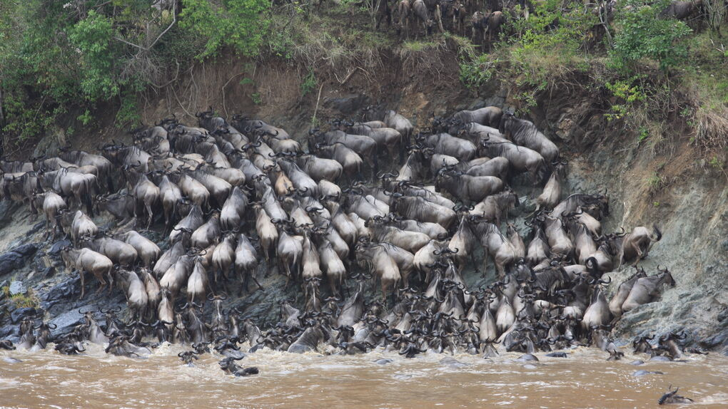 La muerte que alimenta al río Mara