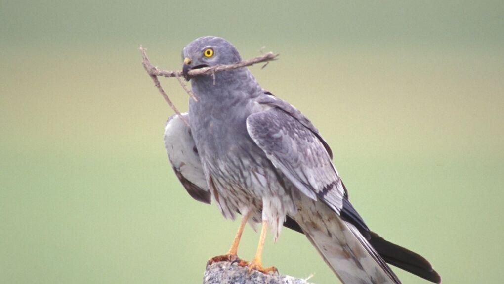 Sexo y plumas: Ha llegado la primavera