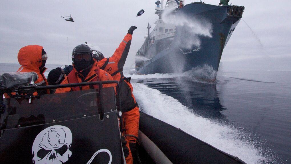 Sea Shepherd, la competencia de Greenpeace