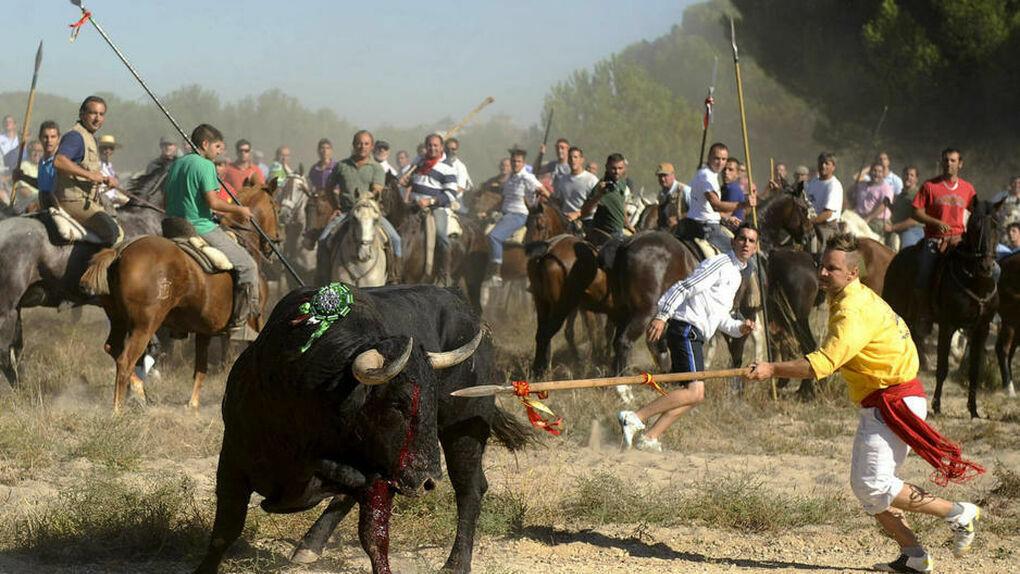 El Supremo ratifica la prohibición de alancear al Toro de la Vega