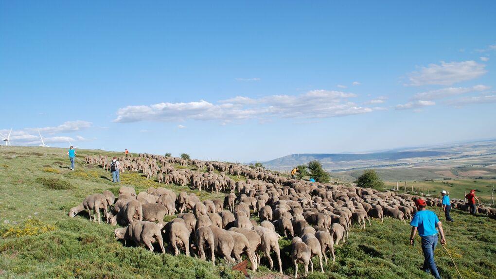 De vacaciones como pastor trashumante