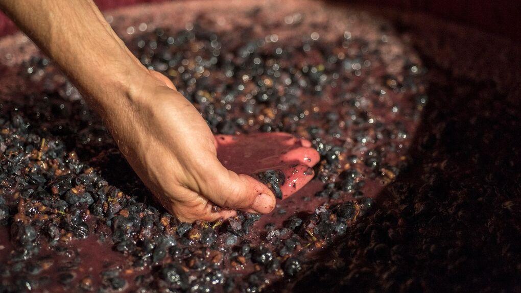 Cómete lo mejor del vino en tus platos