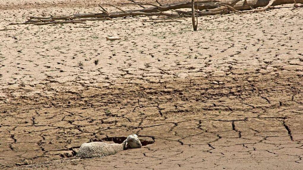La guerra del agua deja prácticamente seca la cabecera del Tajo