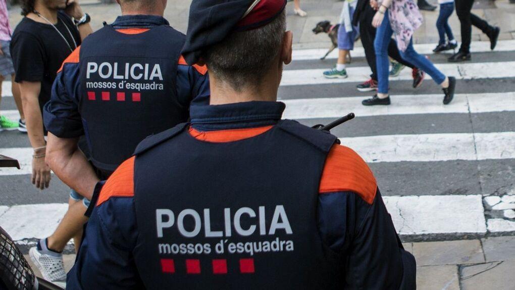 424 detenidos en el golpe a una red que falseaba carnés de conducir