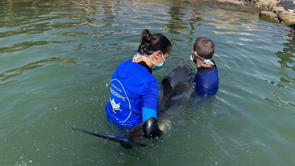 Un virus letal amenaza a los delfines del Mediterráneo