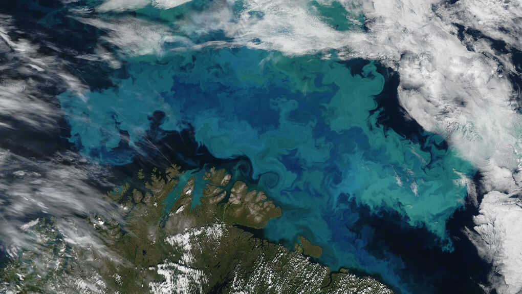 Una investigación avanza en el uso de algas para reducir la contaminación marina