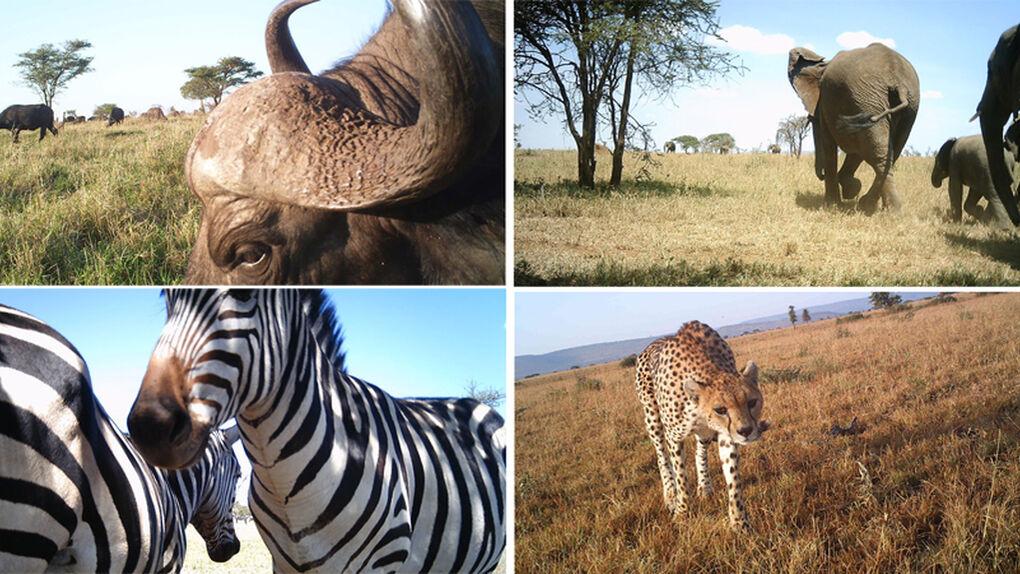 Más de un millón de fotos 'robadas' en el Serengueti