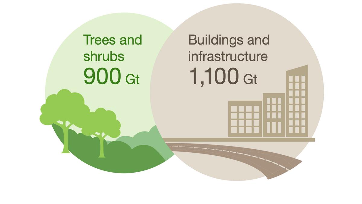 Ya hay más objetos fabricados por los humanos que biomasa