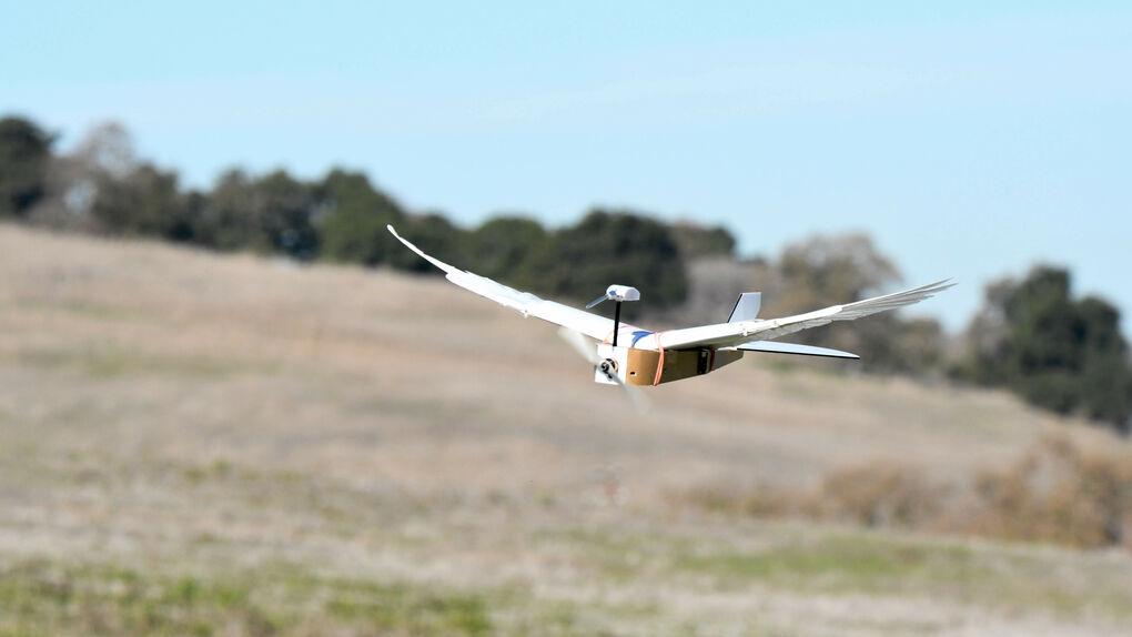 ¿Es un pájaro? ¿Es un avión? ¡Es una paloma robot!