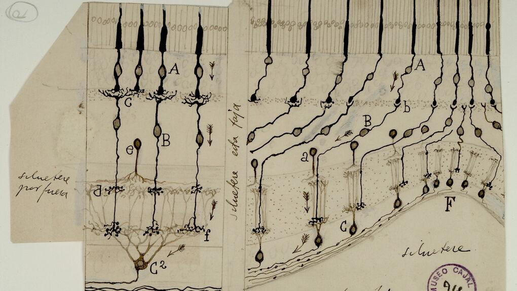 """""""Habrá un proyecto de Museo Cajal en esta legislatura"""""""