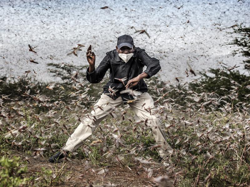 Lucha contra la invasión de langostas en África oriental