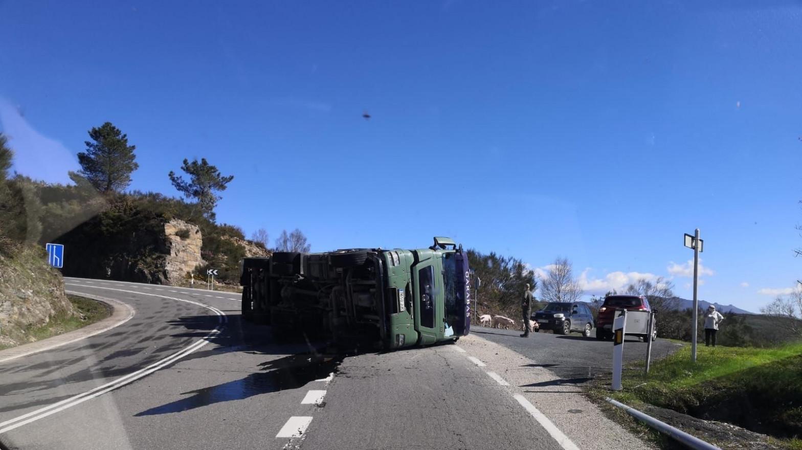 Mueren casi 500 cerdos al volcar un camión en Maceda (Orense)