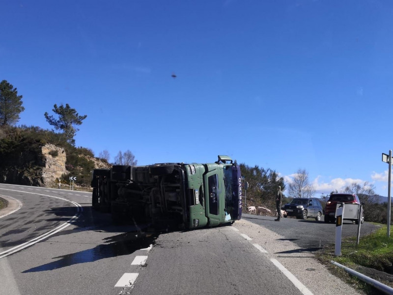 Cerca de 500 cerdos mueren al volcar un camión en Maceda (Ourense)