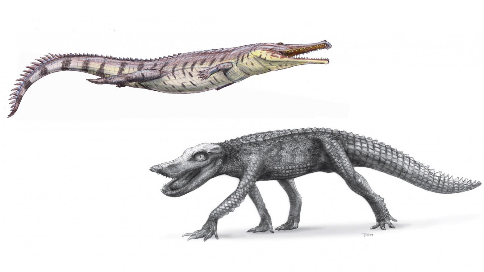 ¿Por qué perdieron los cocodrilos su enorme variedad?