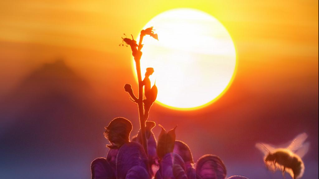 Las temperaturas superarán los 20ºC en gran parte del país este lunes