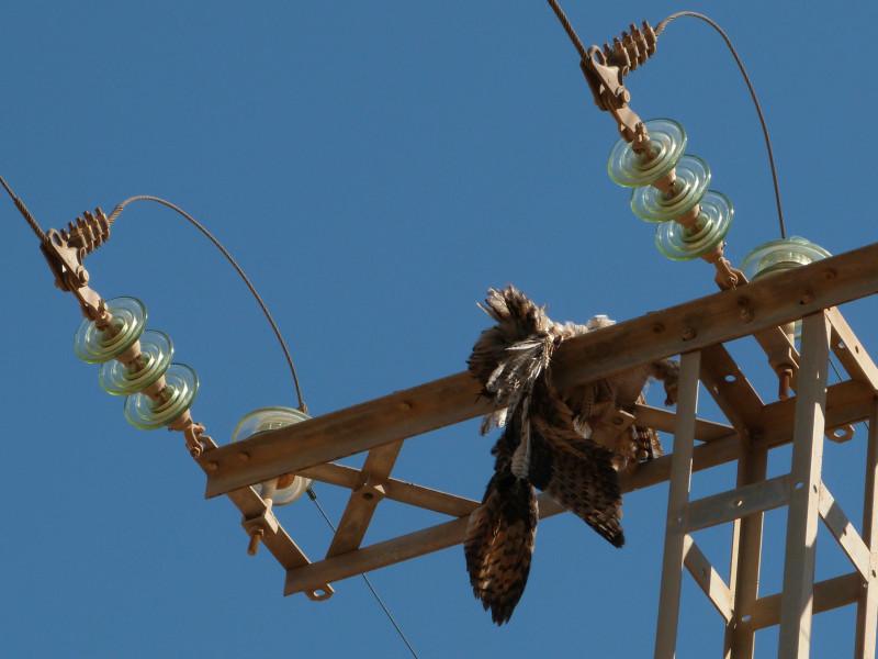 La Fiscalía se querella contra Endesa por las aves electrocutadas en sus torres