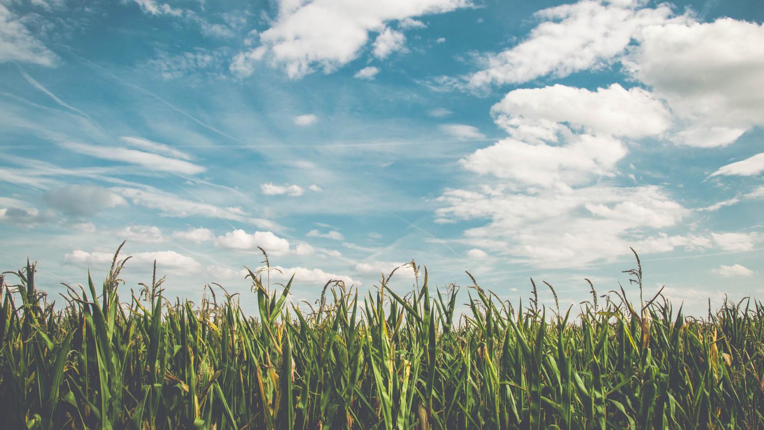 Las temperaturas bajan hasta 10ºC en la meseta, tercio este y Baleares este miércoles