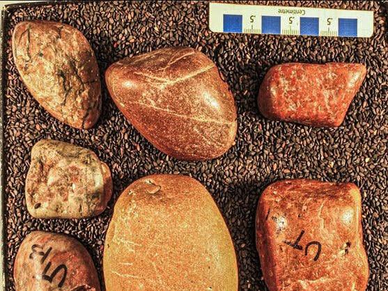 ¿Viajaron estas piedras más de 1000 kilómetros en el estómago de dinosaurios?